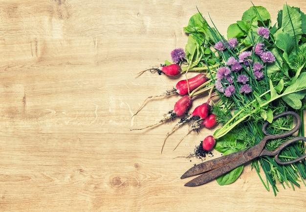 Świeże korzenie rzodkiewki z zielonymi ziołami ogrodowymi. tło żywności. vintage stonowany obraz