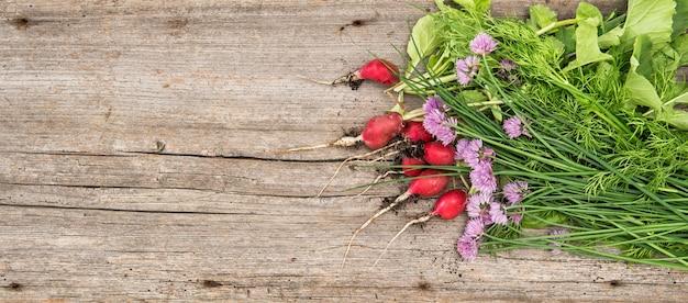 Świeże korzenie rzodkiewki z zielonymi ziołami ogrodowymi. warzywo. zdrowe składniki żywności