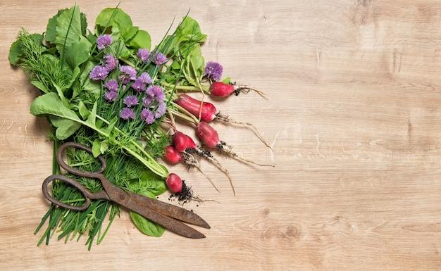 Świeże korzenie rzodkiewki z zielonymi ziołami ogrodowymi. warzywo.