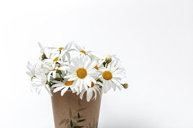 Świeże kwiaty stokrotki. koncepcja wiosny. odosobniony