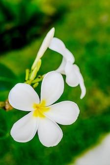 Świeże kwiaty w ogrodzie spa