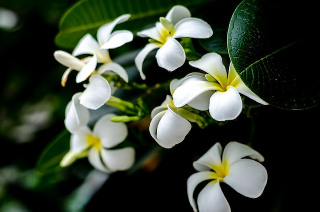 Świeże kwiaty w ogrodzie