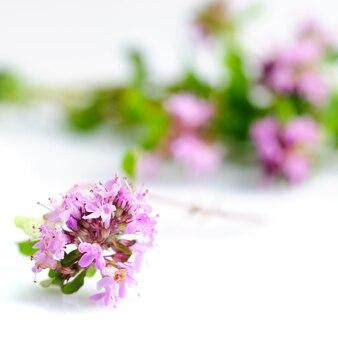 Świeże kwiaty ziela tymianku na stole