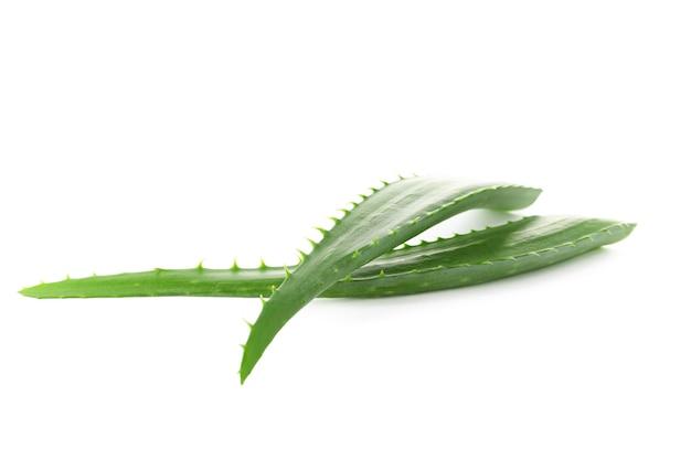 Świeże liście aloesu na białym tle. oczyszczalnia