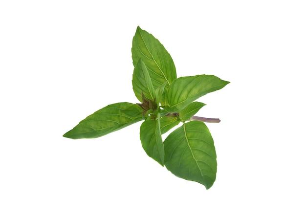 Świeże liście bazylii na białym tle