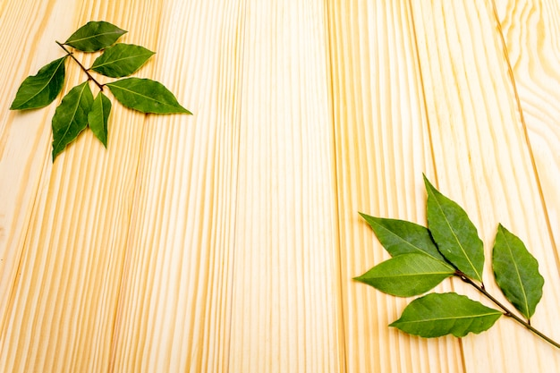 Świeże liście laurowe