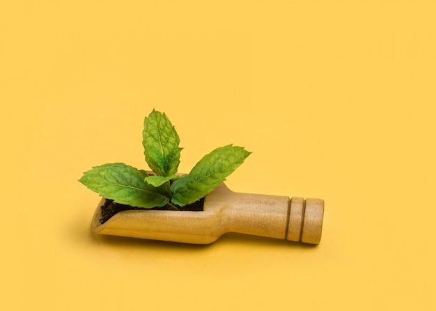 Świeże liście mięty w drewnianej ekologicznej łyżce