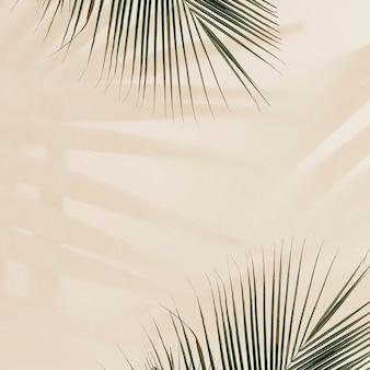Świeże liście palmowe na beżowym tle