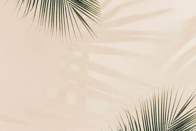 Świeże liście palmowe na beżu