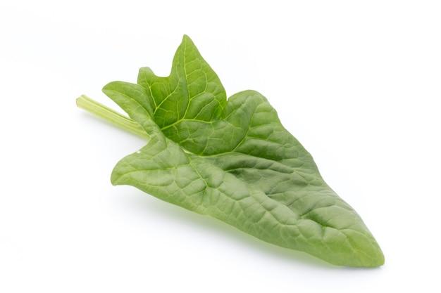 Świeże liście szpinaku na białym tle