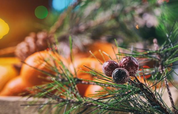 Świeże mandarynki z gałęzi choinki.