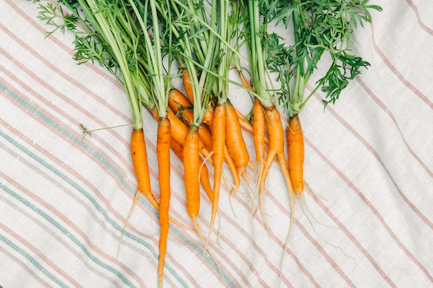 Świeże marchewki z ogrodu. małe marchewki na białym ręczniku. zbiory marchwi.