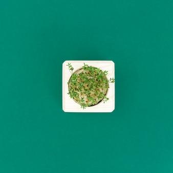 Świeże mikro kiełki rukoli, wegetariańska zdrowa żywność ekologiczna.