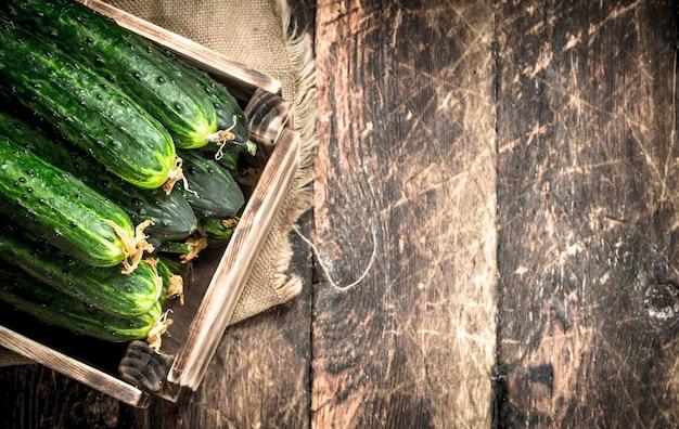 Świeże ogórki w starym pudełku. na drewnianym tle.