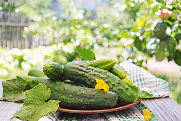 Świeże ogórki z ogrodu na stole w ogrodzie letnim.