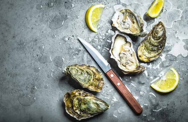 Świeże ostrygi na lodzie, nóż, ćwiartki cytryny. rustykalne tło kamień. otwarte świeże surowe ostrygi.