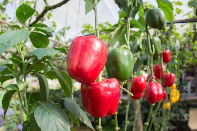 Świeże owoce i warzywa w ogrodzie