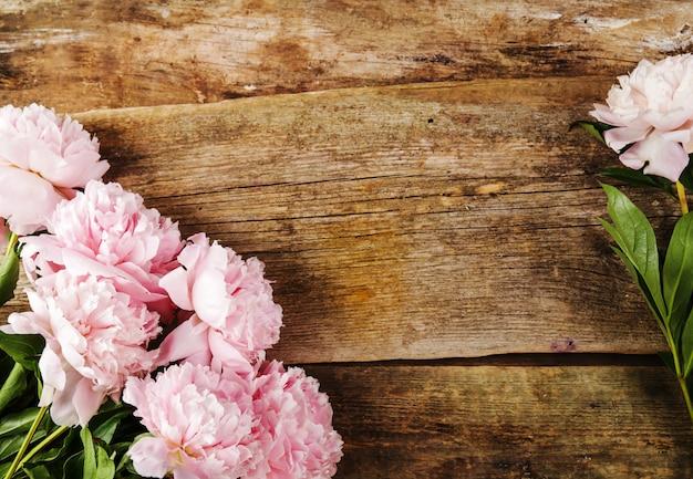 Świeże, piękne kwiaty piwonii