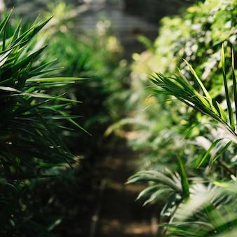 Świeże rośliny rosnące w szklarni