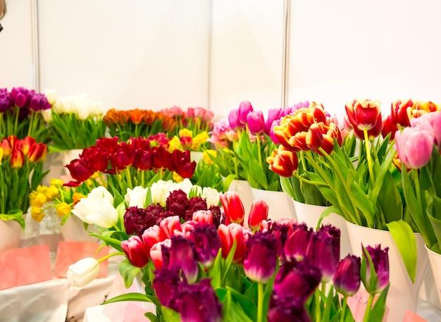 Świeże różne tulipany w sklepie