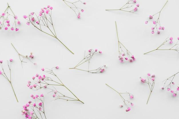 Świeże różowe gałązki kwiatów
