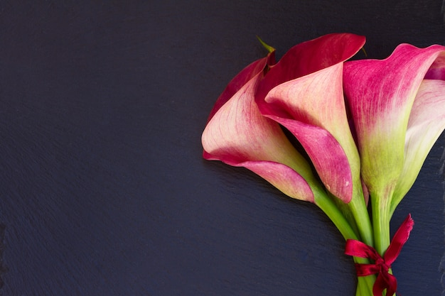 Świeże różowe kwiaty calla lilly z bliska