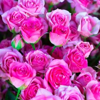 Świeże różowe róże z zielonymi liśćmi