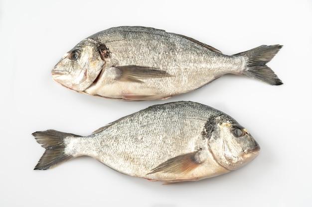 Świeże ryby dorada na białym stole