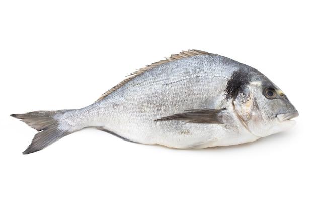 Świeże ryby leszcz na białym tle zbliżenie