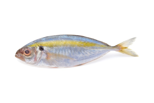Świeże ryby makreli na białym tle