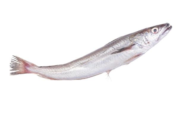 Świeże ryby morszczuk na białej powierzchni