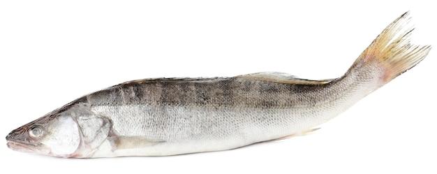 Świeże ryby na białym tle