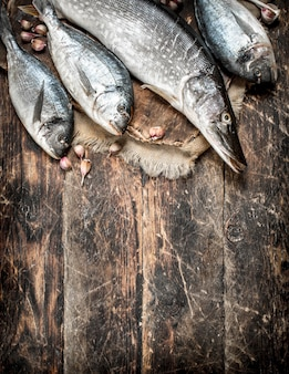 Świeże ryby na pokładzie.