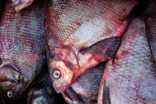 Świeże ryby na targu leszcz