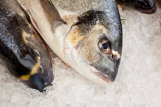 Świeże ryby na targu rybnym