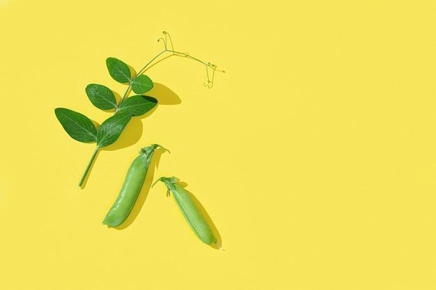 Świeże słodkie strąki zielonego groszku z liśćmi kiełki grochu zdrowe jedzenie warzyw młode zielone pędy