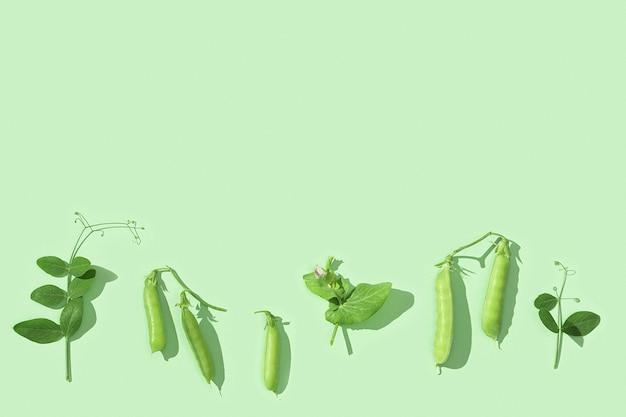 Świeże słodkie strąki zielonego groszku z liśćmi kiełków grochu zdrowa żywność roślinna