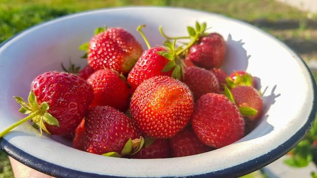 Świeże soczyste dojrzałe smaczne organiczne truskawki w starej metalowej misce na zewnątrz w słoneczny letni dzień. truskawkowoczerwone świeże jagody i słodkie soczyste owoce.