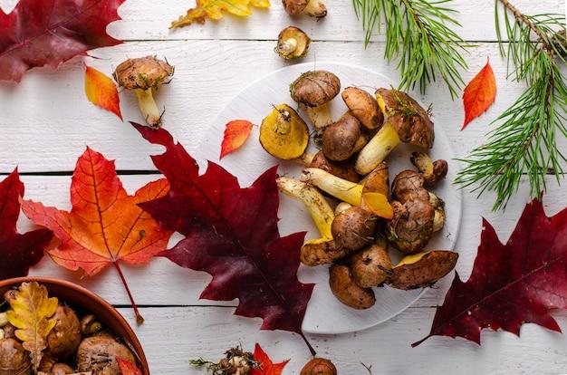 Świeże surowe jadalne tłuste pieczarki na białym drewnianym tle dekorującym z spadać liśćmi. przysmak.