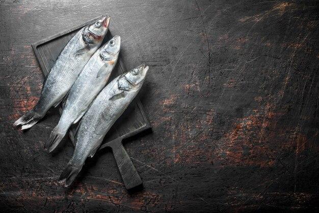Świeże surowe ryby labraksa.