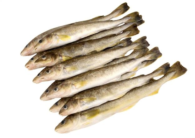 Świeże surowe ryby na białym tle na białej powierzchni