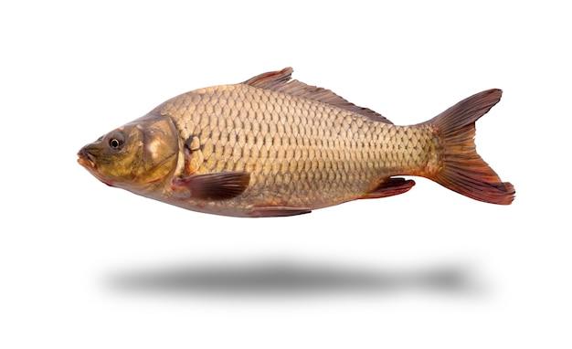 Świeże surowe ryby na białym tle