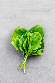 Świeże umyte zielone liście babki roślin leczniczych na szarym tle