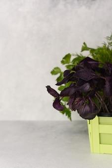Świeże warzywa domowe. produkcja domowa bazylia, koperek, natka pietruszki, sałata liściowa. świeże warzywa w kwarantannie. wyhoduj zdrowe witaminowe jedzenie w domu przy oknie.