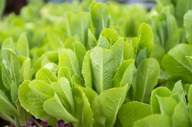 Świeże warzywa ekologiczne w gospodarstwie ekologicznym