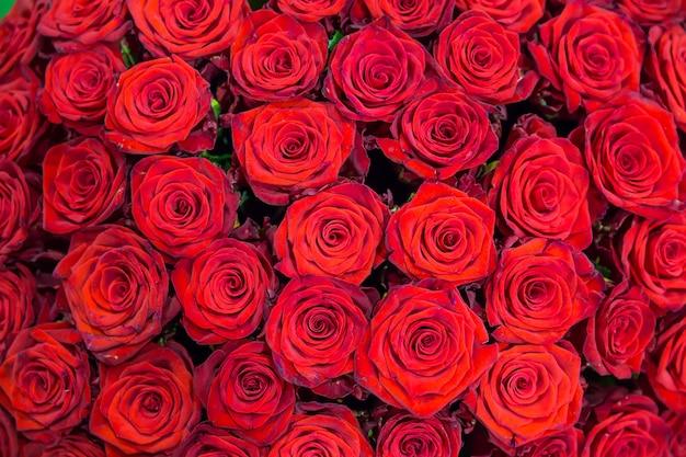 Świeże wiosenne czerwone róże. tekstura lub tło