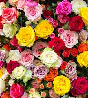Świeże wiosenne kolorowe róże w tle