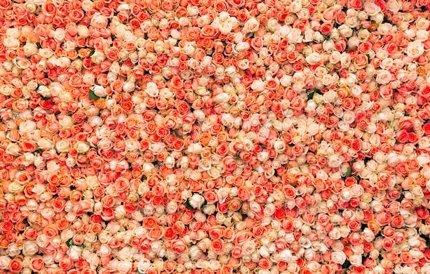 Świeże wiosenne róże róże tło