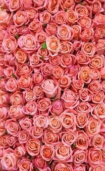 Świeże Wiosenne Róże Róże W Tle Premium Zdjęcia