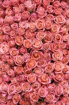 Świeże wiosenne różowe róże. tekstura lub tło
